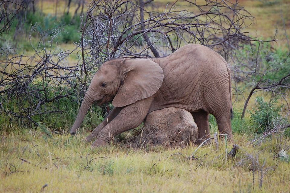 Elephant Image Side-view