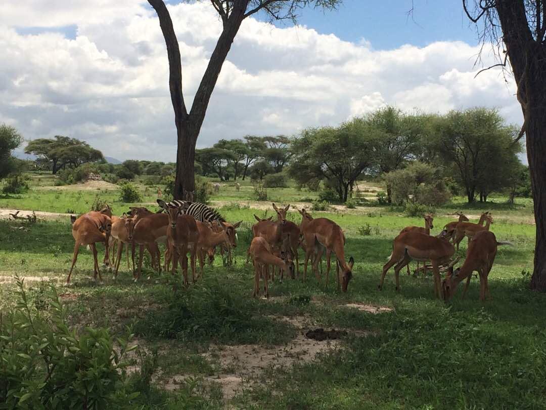 Wild animals in Tarangire National Park.